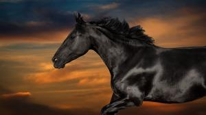 Horserunning-across-a-sunset-sky